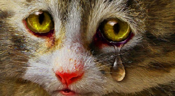 fluffy kitty cat