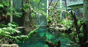 Tropical Rainforests at the California Academy of Science