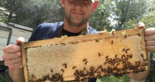 Restoring the Bee's Knees