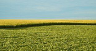 Non-GMO Controversy