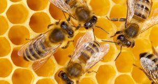 No Bees, No Food