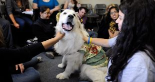 Therapy Dogs in Schools