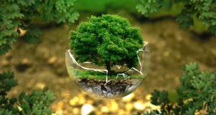 Busted Environmental Myths