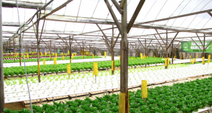 The Aeroponics System and How it Works