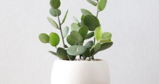 Growing Indoor Plants