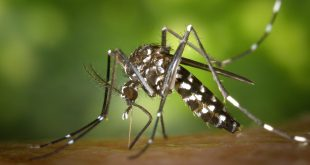 Insect and Tick-Transmitted Diseases