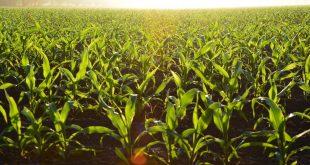 Are GMOs Dangerous?